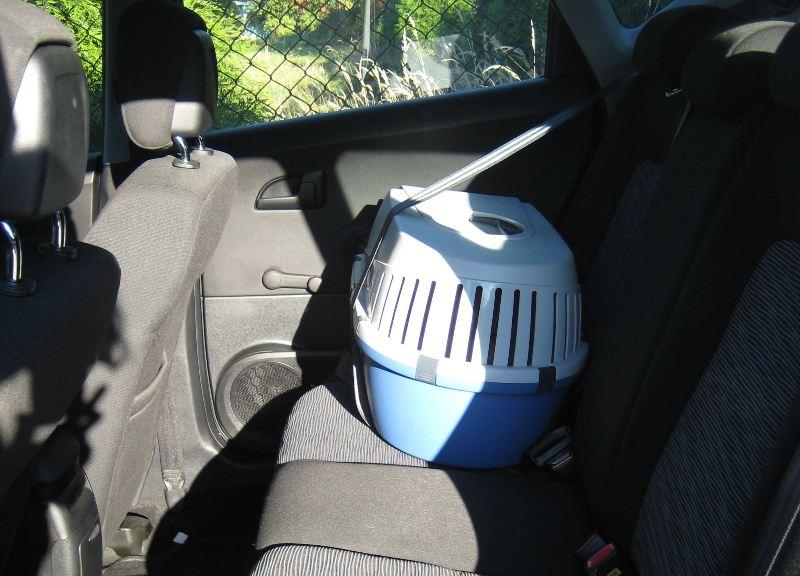 transport kota w samochodzie