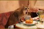 karma dla kotów steryzlizowanych