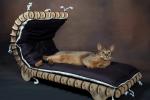leżanka dla kota
