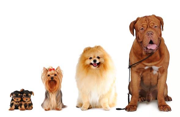 karmy dla psów