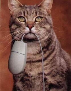 kot je komputerową mysz