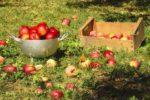 jabłka przepisy