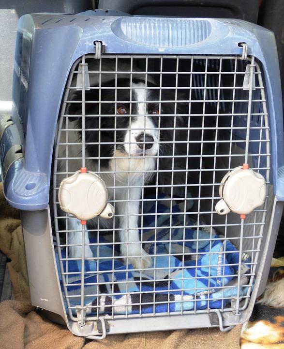 pies bezpeczny w podróży