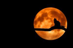 kot na tle księżyca