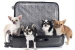 jak transportować zwierzęta domowe